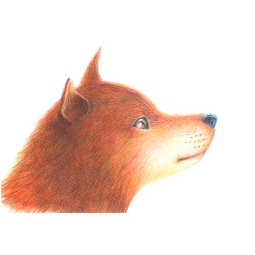 150716_dog_shiba_01