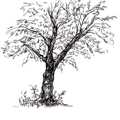 150825_tree_sq01