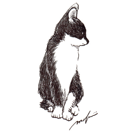140402_cat_buchi_sq01