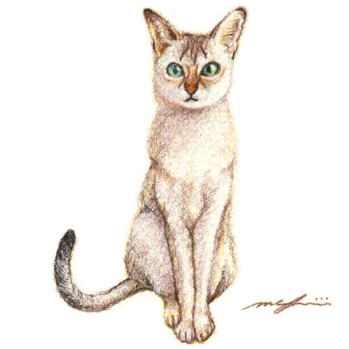 160211_cat_singapura_sq01