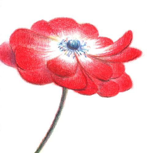 160305_anemone_sq01