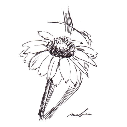160713_flower_nazo01