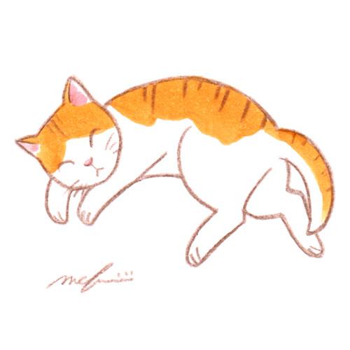 160714_cat_hirune01