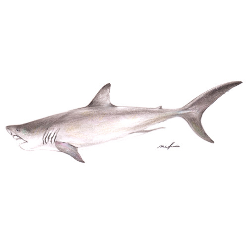 161002_great_white_shark01
