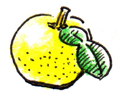 ゆず_色鉛筆ペンイラスト