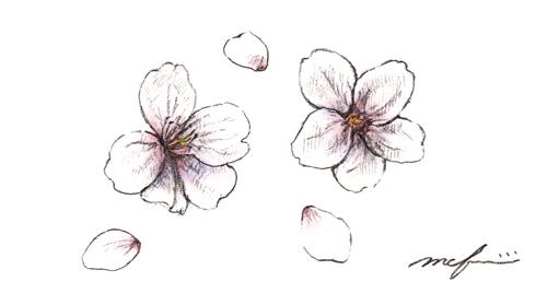 ソメイヨシノ_鉛筆マーカーイラスト
